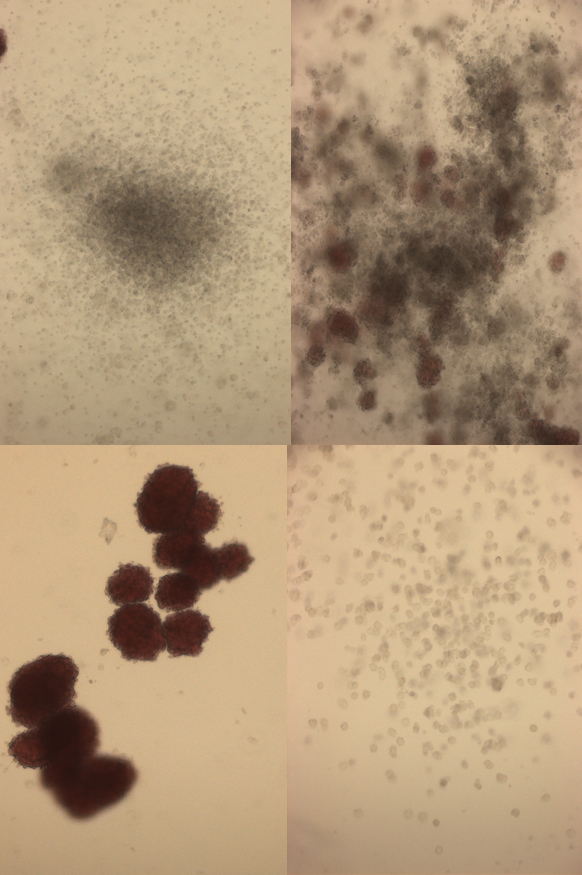 cd34+ microscopy