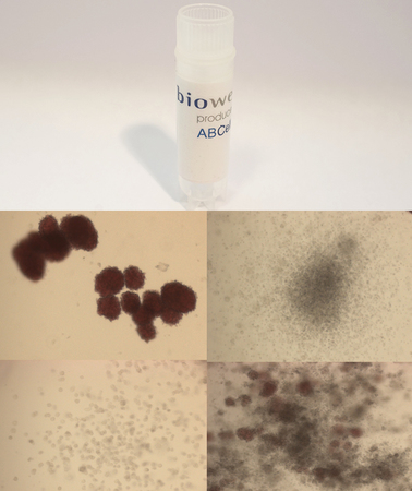 Frozen CD34+ cells Single donor - Biowest, The Serum Specialist